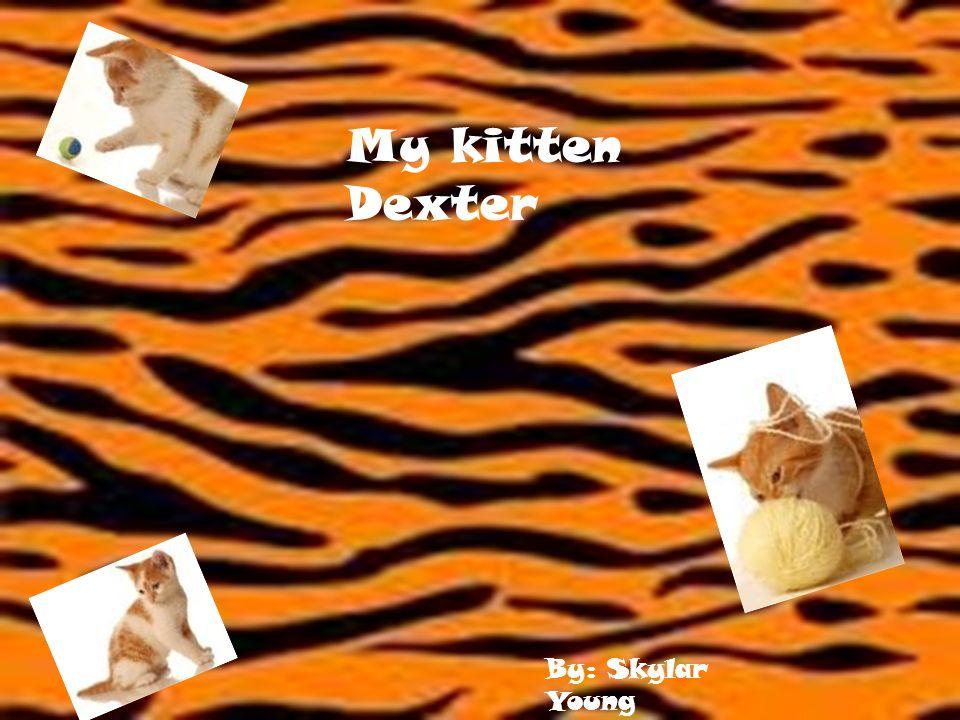 My kitten Dexter By: Skylar Young