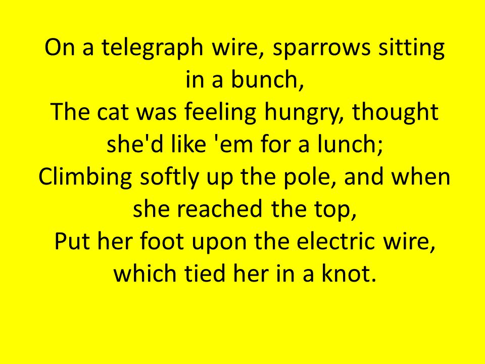 On a telegraph wire, sparrows sitting in a bunch, The cat was feeling hungry, thought she d like em for a lunch; Climbing softly up the pole, and when she reached the top, Put her foot upon the electric wire, which tied her in a knot.