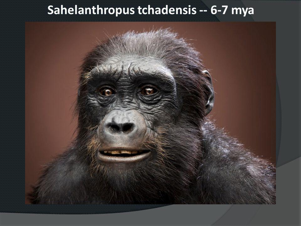 Sahelanthropus tchadensis -- 6-7 mya