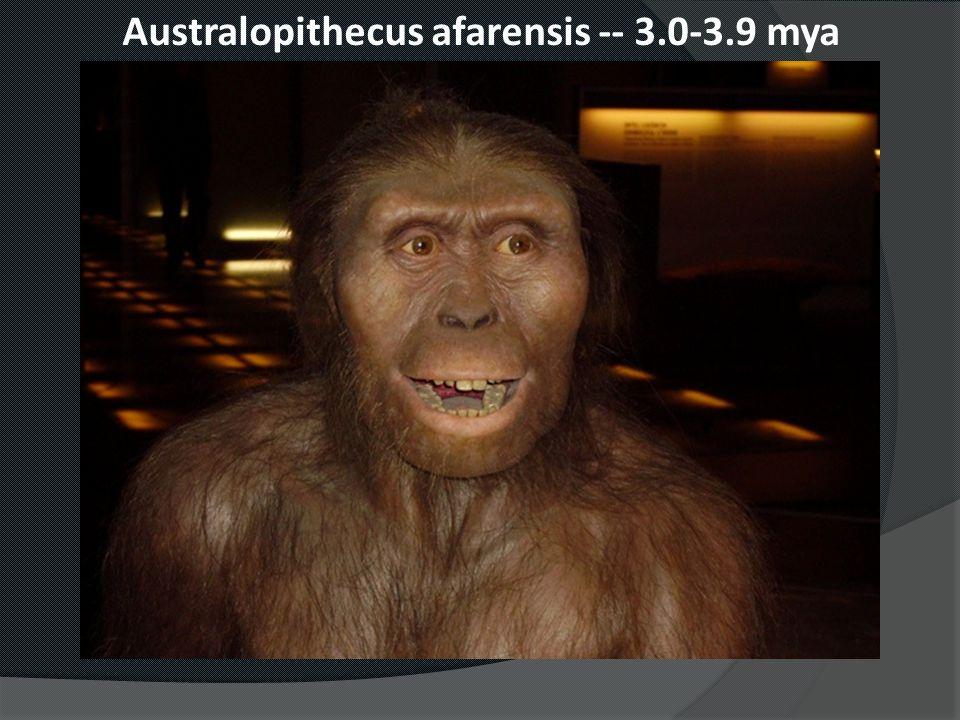 Australopithecus afarensis -- 3.0-3.9 mya