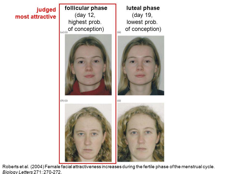 follicular phase (day 12, highest prob. of conception) luteal phase (day 19, lowest prob. of conception) Roberts et al. (2004) Female facial attractiv