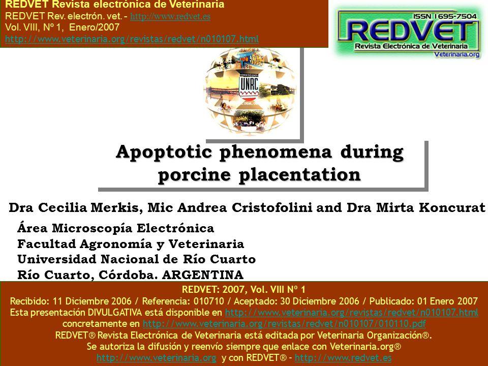 Apoptotic phenomena during porcine placentation Área Microscopía Electrónica Facultad Agronomía y Veterinaria Universidad Nacional de Río Cuarto Río C