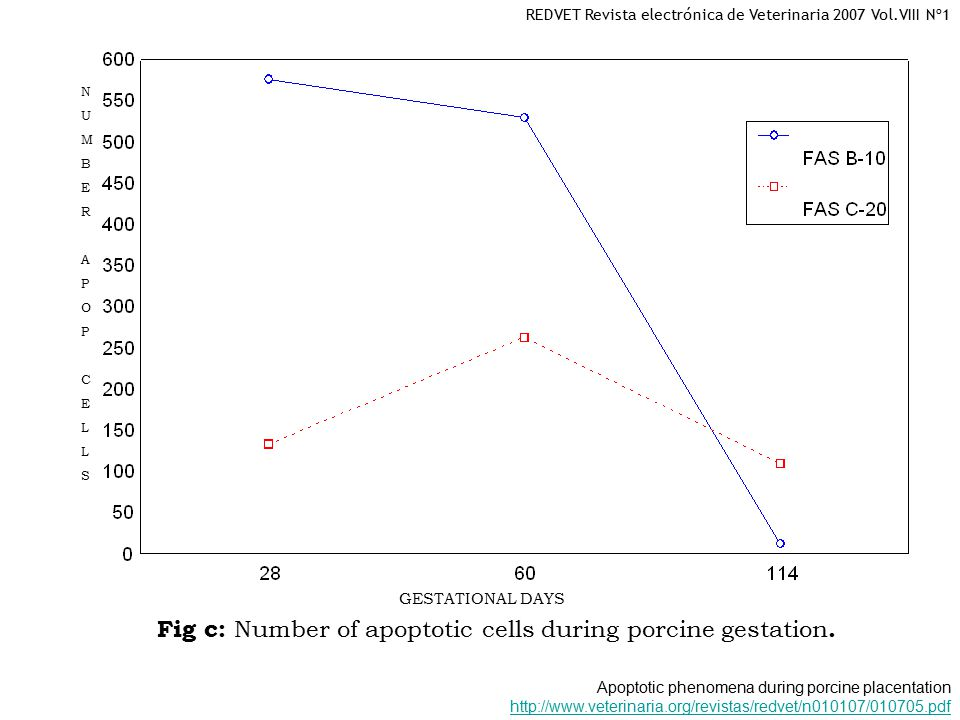 GESTATIONAL DAYS NUMBERAPOPCELLSNUMBERAPOPCELLS Fig c: Number of apoptotic cells during porcine gestation.