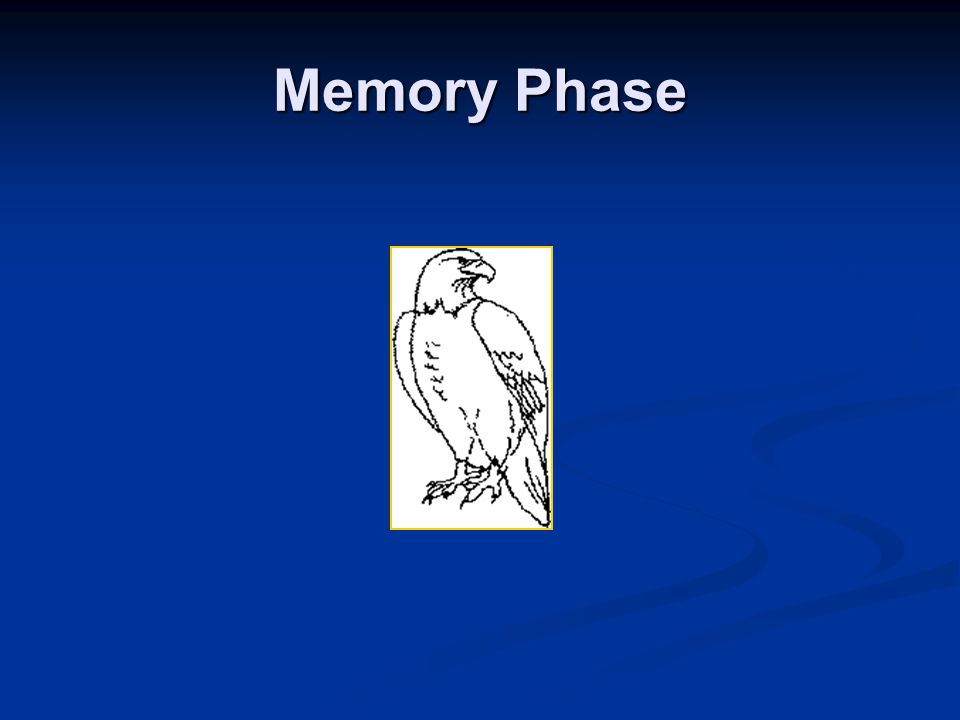Memory Phase