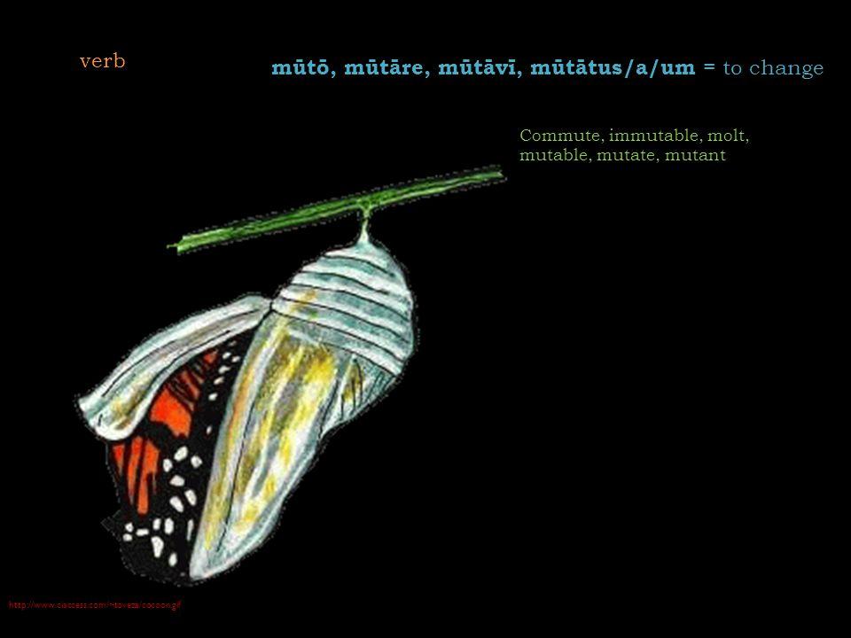 http://www.ciaccess.com/~toveza/cocoon.gif mūtō, mūtāre, mūtāvī, mūtātus/a/um = to change Commute, immutable, molt, mutable, mutate, mutant verb