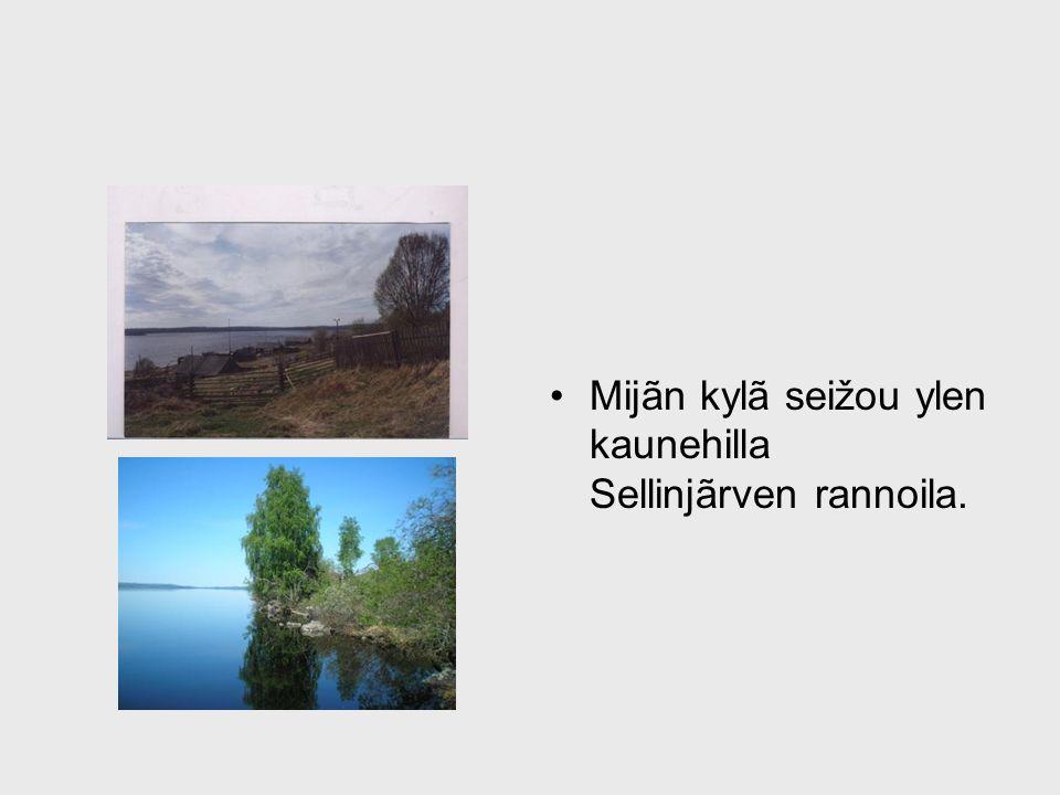 Mijãn kylã seižou ylen kaunehilla Sellinjãrven rannoila.