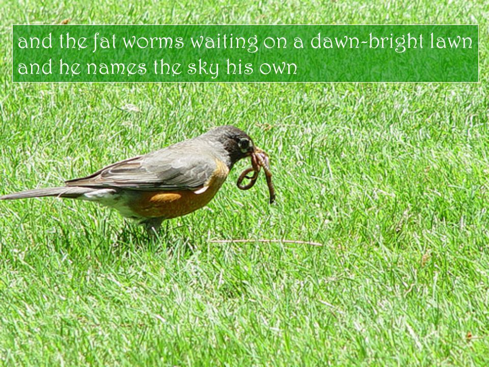 and the fat worms waiting on a dawn-bright lawn and he names the sky his own
