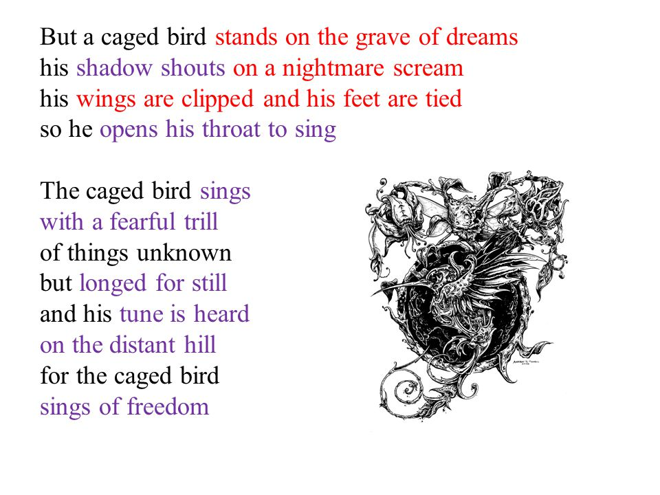 But a caged bird stands on the grave of dreams his shadow shouts on a nightmare scream his wings are clipped and his feet are tied so he opens his thr
