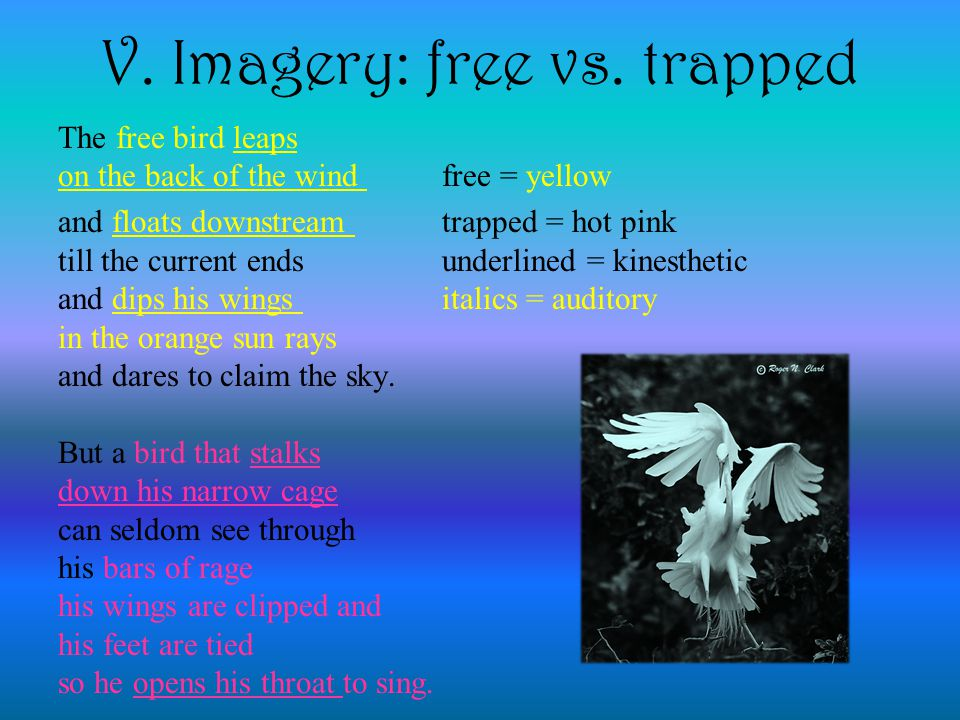 V. Imagery: free vs. trapped The free bird leaps on the back of the wind free = yellow and floats downstream trapped = hot pink till the current ends