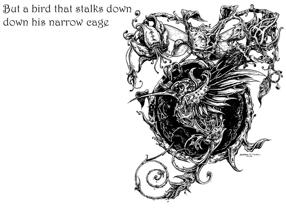 But a bird that stalks down down his narrow cage