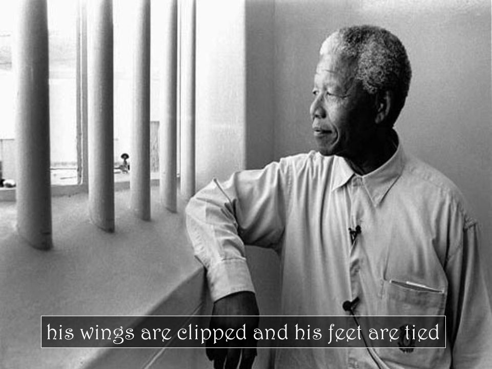 his wings are clipped and his feet are tied