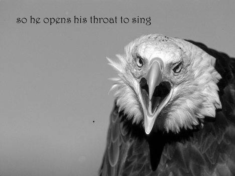 so he opens his throat to sing