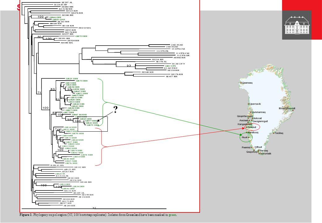STATENS SERUM INSTITUT Figure 1.Phylogeny on pol-region (NJ, 100 bootstrap replicates).