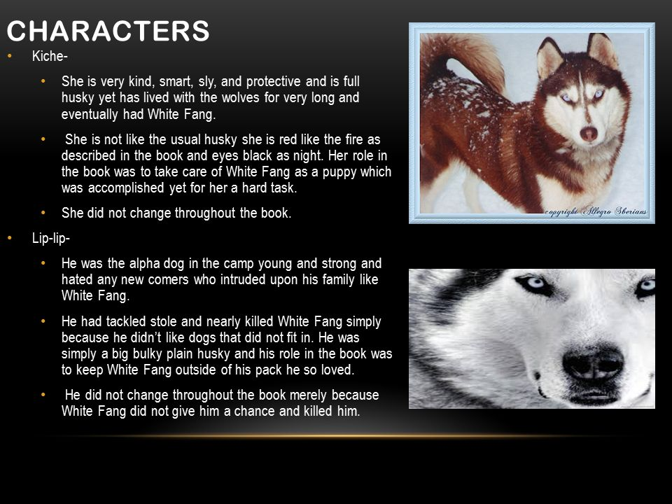 CHARACTERS Kiche- She is very kind, smart, sly, and protective and is full husky yet has lived with the wolves for very long and eventually had White Fang.