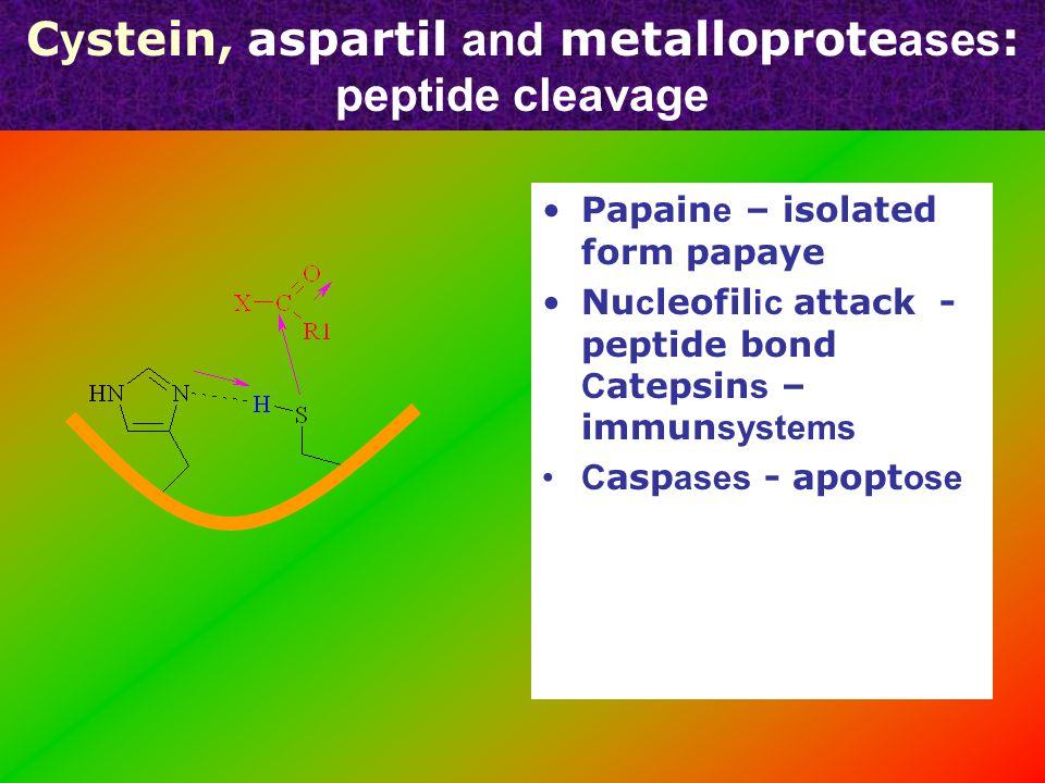 Substrate binding site of chymotrypsin, trypsin & elastase OO Asp 189 Val 216 Val 190 Chy motr y psin e Tr y psin e Elast ase