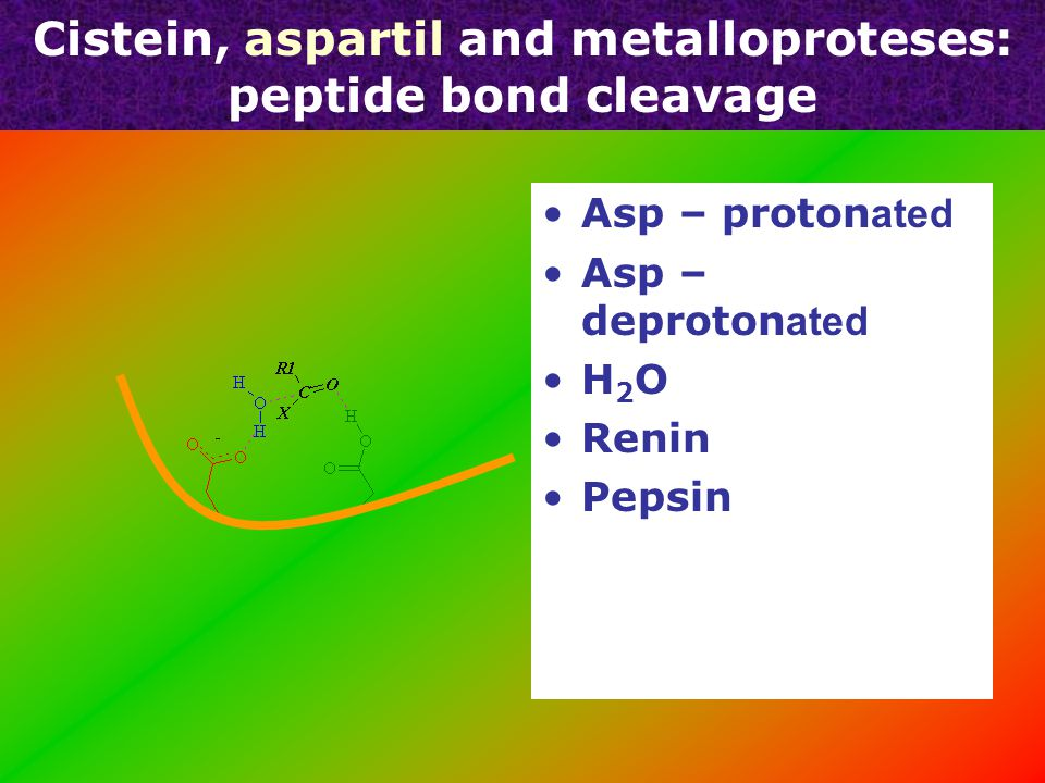 C y stein, aspartil and metalloprote ases : peptide cleavage Papain e – isolated form papaye Nu c leofil ic attack - peptide bond C atepsin s – immun systems C asp ases - apopt ose