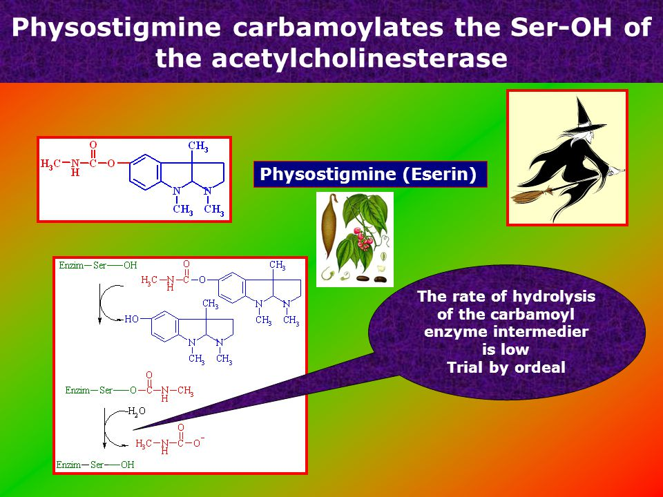 Organic phosphate inhibitors of acetylcholine esterase Sarin – Tokyo-i tube Tabun Chemical weapon légzésbénulás Parathion – rovarirtó Rádioaktív DIFP egér izom diagfragma végkészülék: 12000 / mm 2 receptor