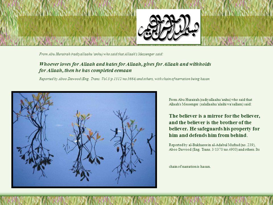 From Abu Hurairah (radiyallaahu anhu) who said that Allaah s Messenger (salallaahu alaihi wa sallam) said: The believer is a mirror for the believer, and the believer is the brother of the believer.