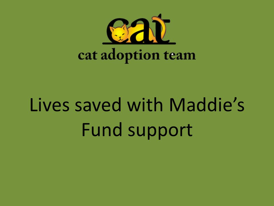 Lives saved with Maddie's Fund support