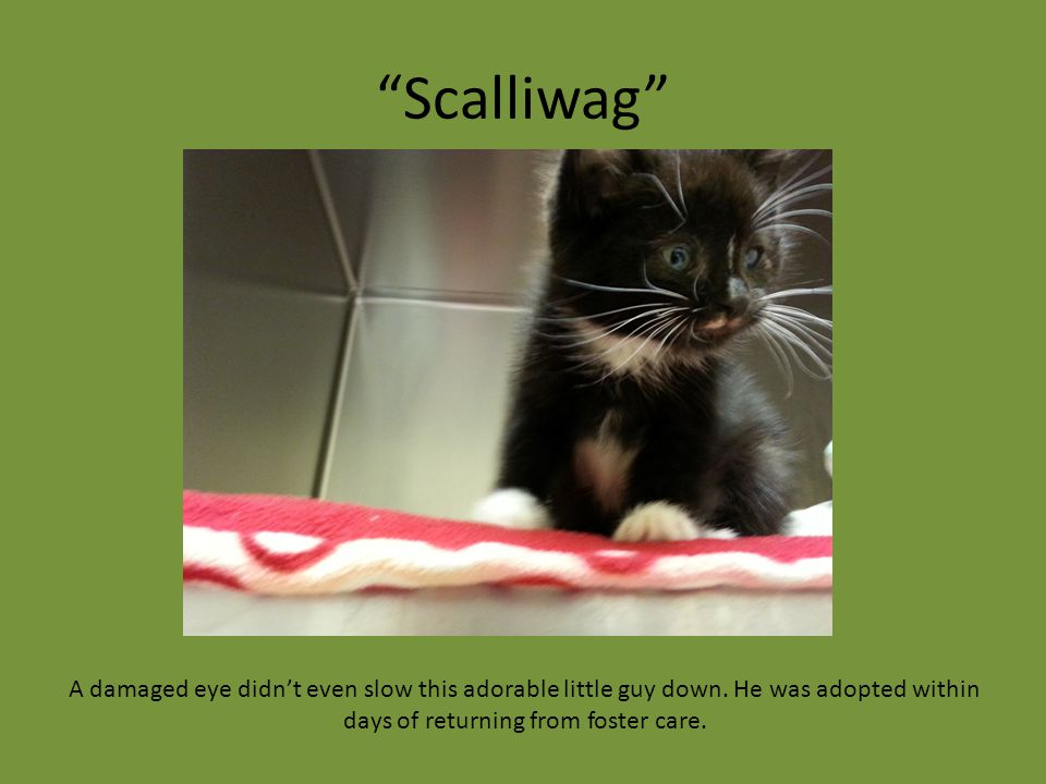 """Scalliwag"" A damaged eye didn't even slow this adorable little guy down. He was adopted within days of returning from foster care."