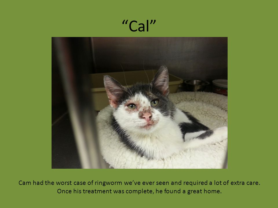 """Cal"" Cam had the worst case of ringworm we've ever seen and required a lot of extra care. Once his treatment was complete, he found a great home."