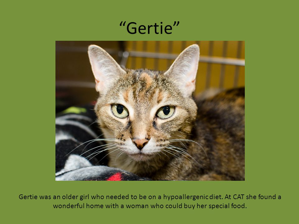 """Gertie"" Gertie was an older girl who needed to be on a hypoallergenic diet. At CAT she found a wonderful home with a woman who could buy her special"
