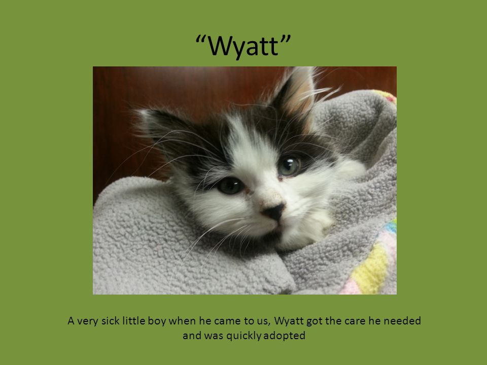 """Wyatt"" A very sick little boy when he came to us, Wyatt got the care he needed and was quickly adopted"