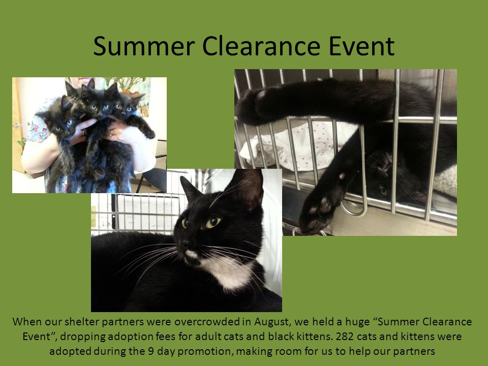 "Summer Clearance Event When our shelter partners were overcrowded in August, we held a huge ""Summer Clearance Event"", dropping adoption fees for adult"