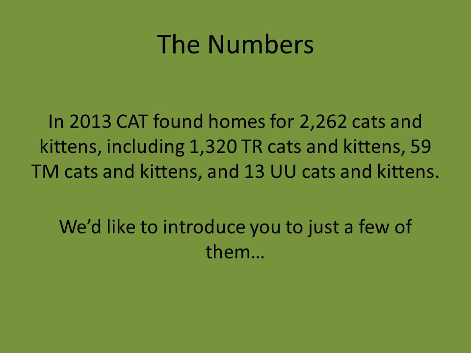 The Numbers In 2013 CAT found homes for 2,262 cats and kittens, including 1,320 TR cats and kittens, 59 TM cats and kittens, and 13 UU cats and kitten