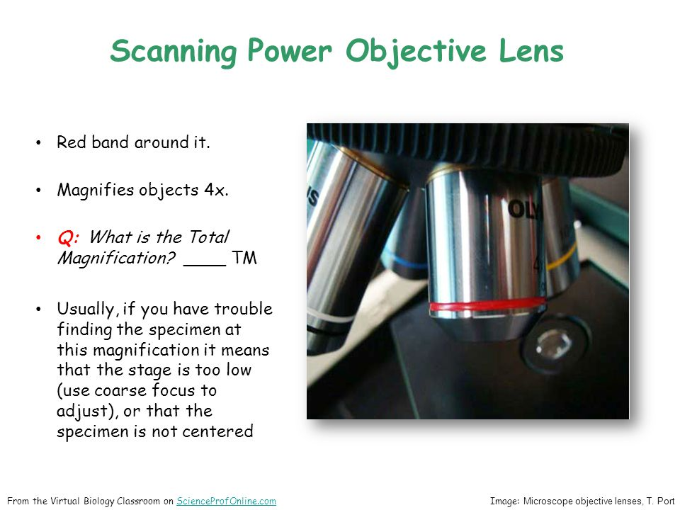 Scanning Power Objective Lens Image: Microscope objective lenses, T. Port Red band around it. Magnifies objects 4x. Q: What is the Total Magnification