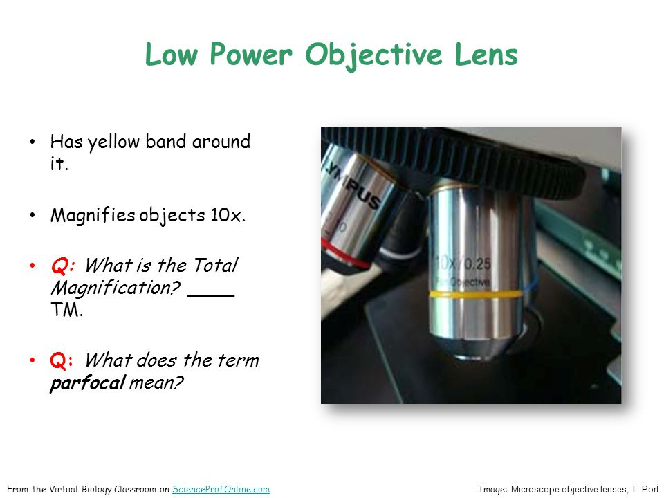 Low Power Objective Lens Has yellow band around it. Magnifies objects 10x. Q: What is the Total Magnification? ____ TM. Q: What does the term parfocal