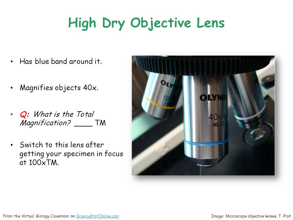 High Dry Objective Lens Has blue band around it. Magnifies objects 40x. Q: What is the Total Magnification? ____ TM Switch to this lens after getting