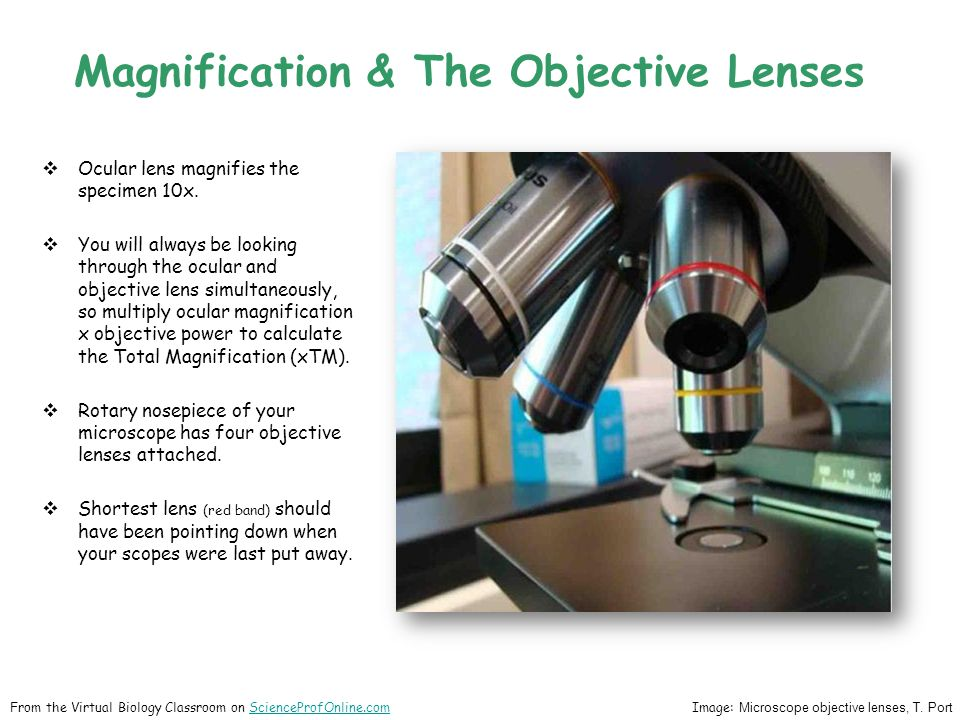  Ocular lens magnifies the specimen 10x.  You will always be looking through the ocular and objective lens simultaneously, so multiply ocular magnif