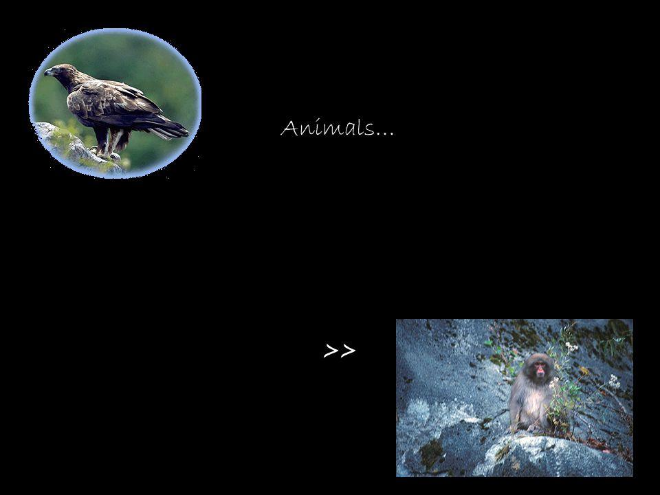 Animals… >>