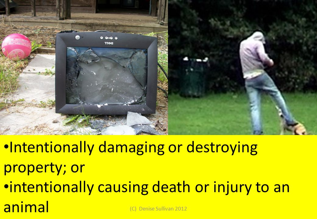 Intentionally damaging or destroying property; or intentionally causing death or injury to an animal (C) Denise Sullivan 2012