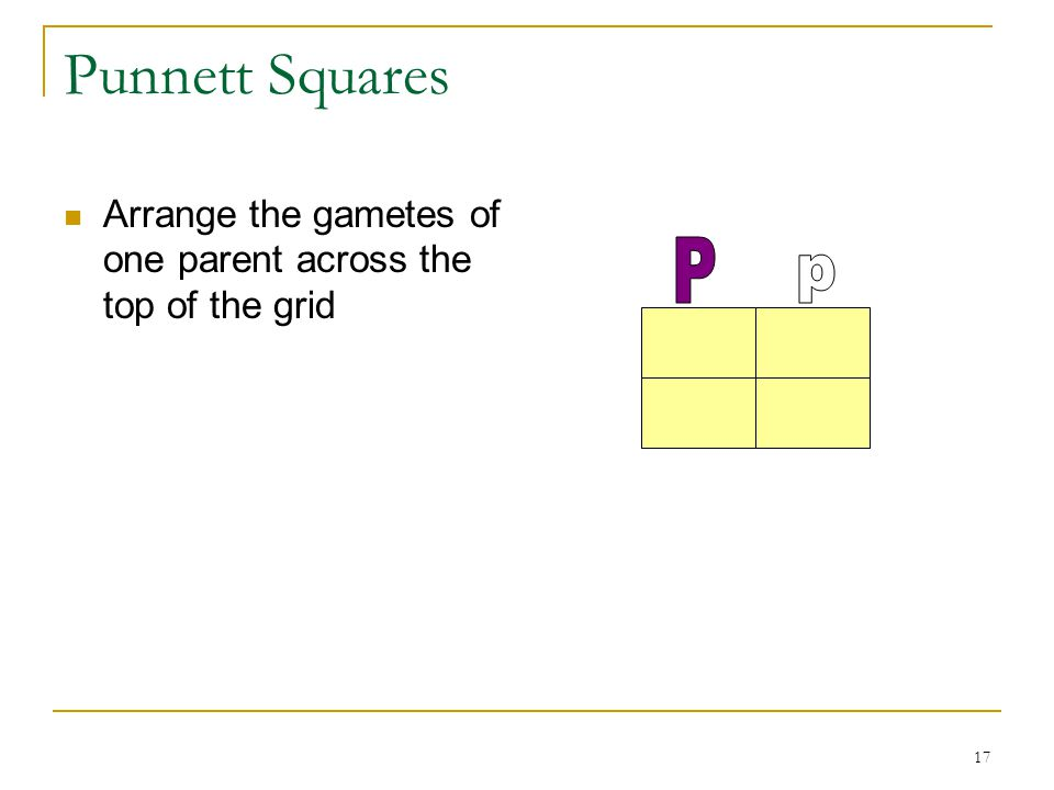 17 Punnett Squares Arrange the gametes of one parent across the top of the grid