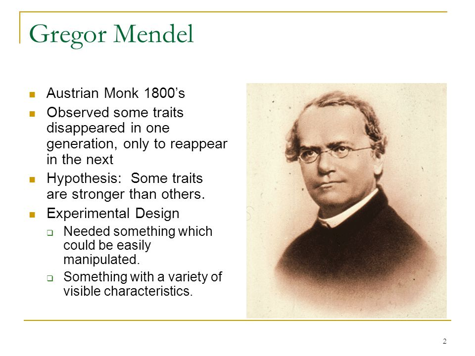 2 Gregor Mendel Austrian Monk 1800's Observed some traits disappeared in one generation, only to reappear in the next Hypothesis: Some traits are stro
