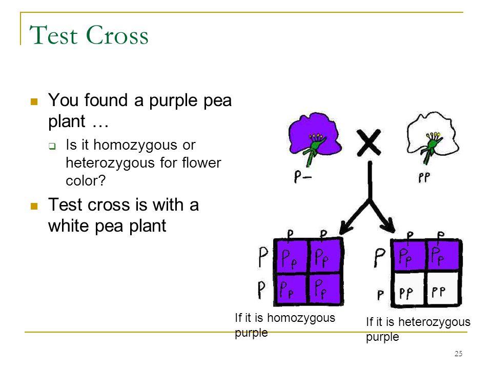 25 Test Cross You found a purple pea plant …  Is it homozygous or heterozygous for flower color? Test cross is with a white pea plant If it is homozy