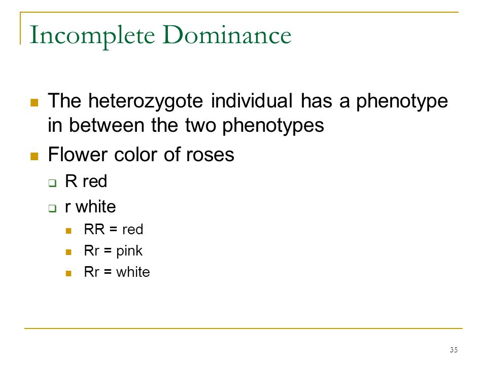 35 Incomplete Dominance The heterozygote individual has a phenotype in between the two phenotypes Flower color of roses  R red  r white RR = red Rr