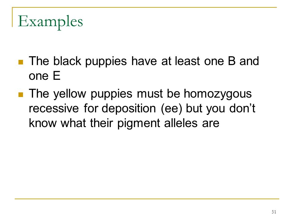 51 Examples The black puppies have at least one B and one E The yellow puppies must be homozygous recessive for deposition (ee) but you don't know wha