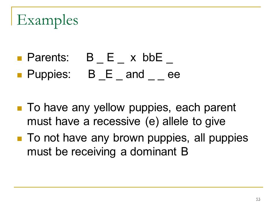 53 Examples Parents: B _ E _ x bbE _ Puppies: B _E _ and _ _ ee To have any yellow puppies, each parent must have a recessive (e) allele to give To no