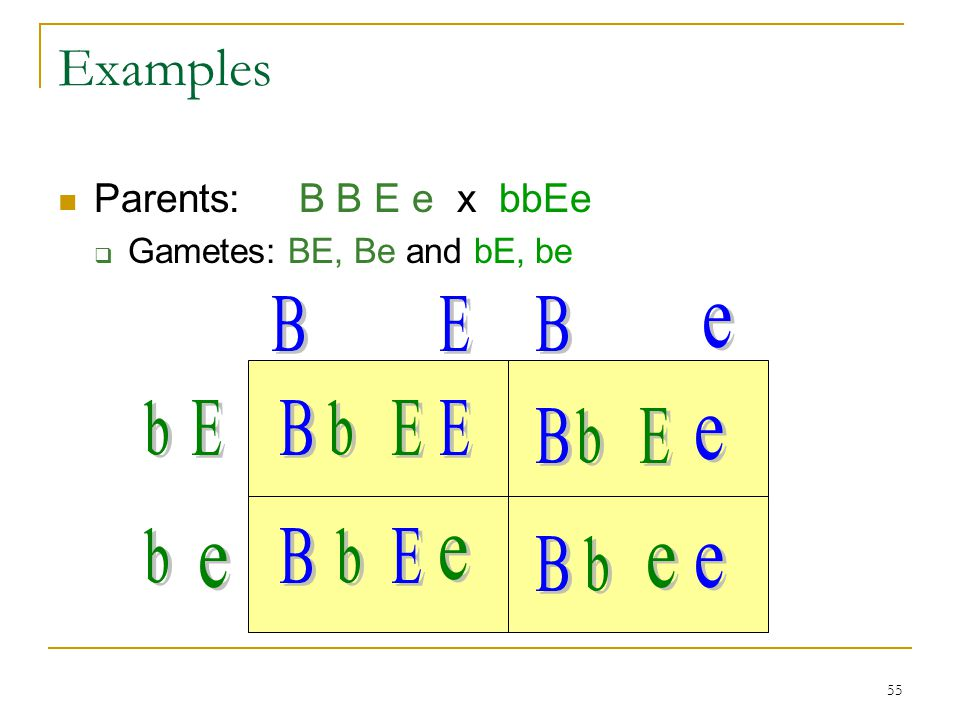 55 Examples Parents: B B E e x bbEe  Gametes: BE, Be and bE, be