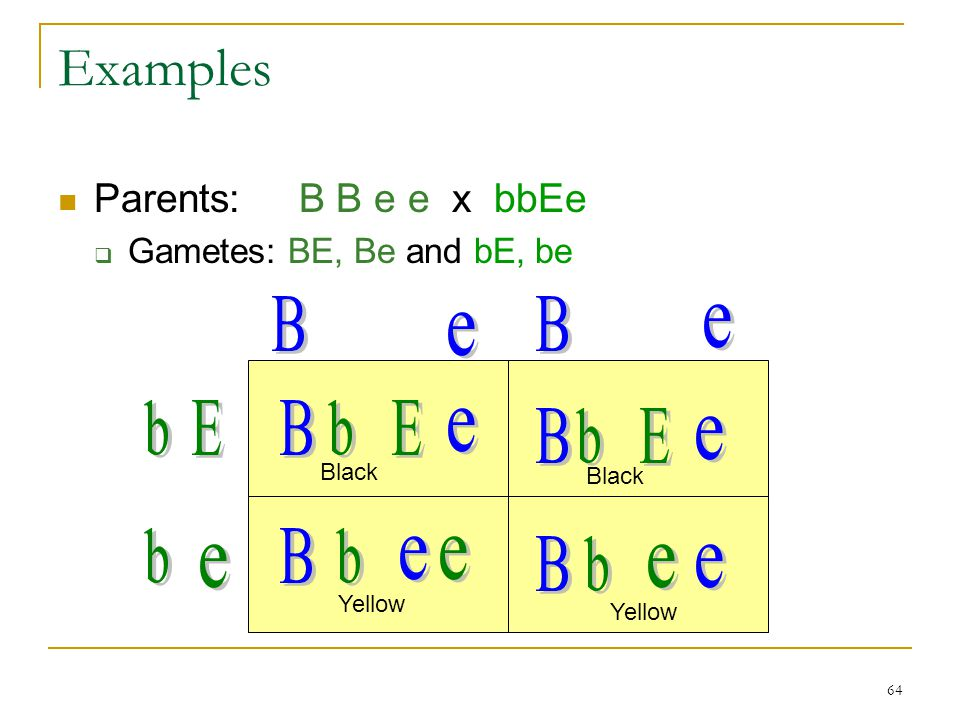 64 Examples Parents: B B e e x bbEe  Gametes: BE, Be and bE, be Black Yellow Black