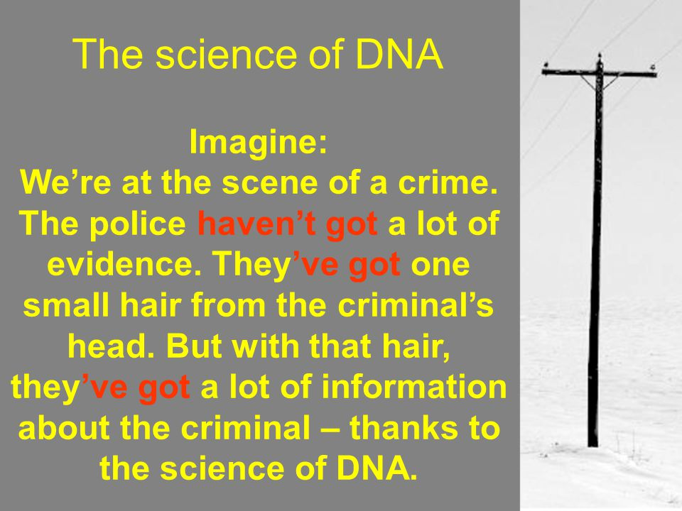 The science of DNA Imagine: We're at the scene of a crime. The police haven't got a lot of evidence. They've got one small hair from the criminal's he