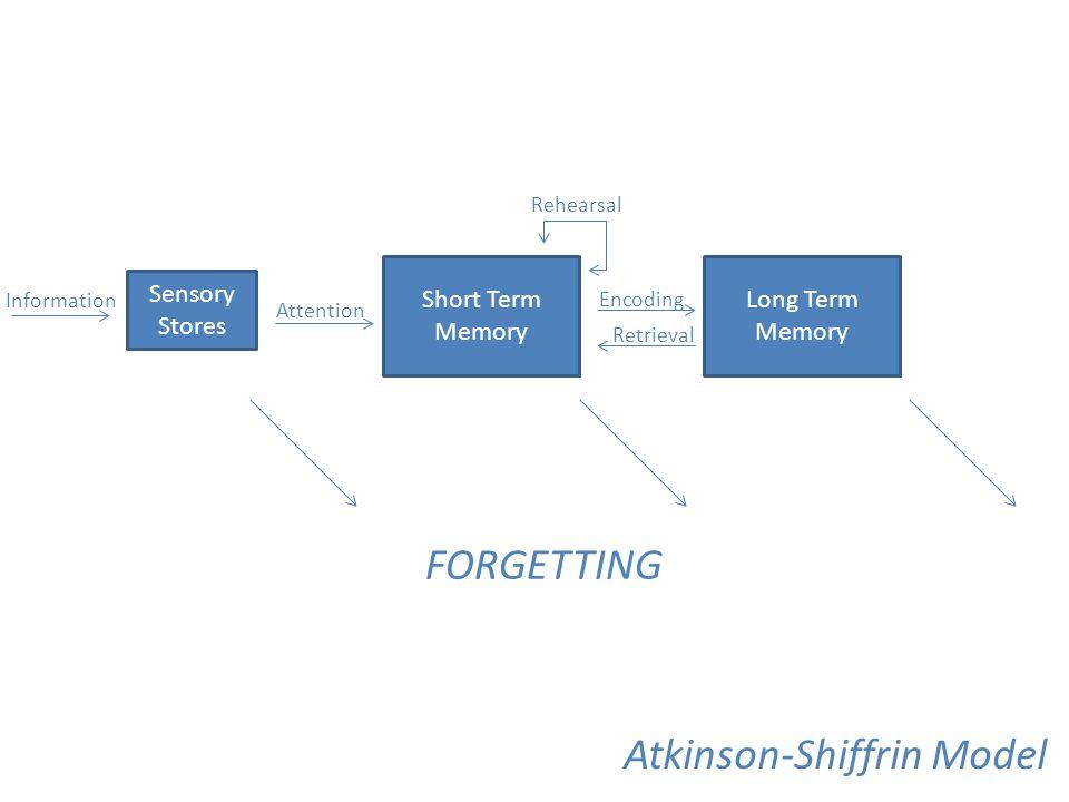 Sensory Stores Short Term Memory Long Term Memory FORGETTING Information Attention Rehearsal Encoding Retrieval Atkinson-Shiffrin Model