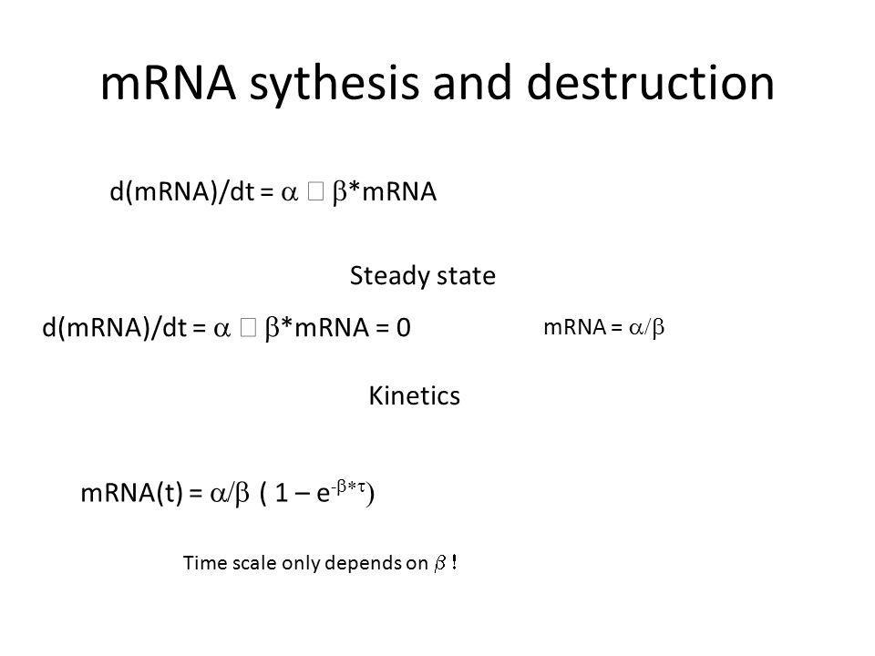 mRNA sythesis and destruction d(mRNA)/dt =  –  *mRNA Steady state d(mRNA)/dt =  –  *mRNA = 0 mRNA =  Kinetics mRNA(t) =  ( 1 – e -   Time scale only depends on 