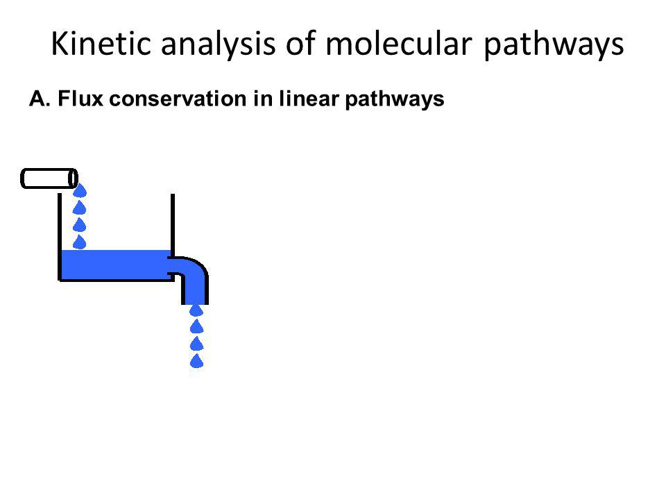 Kinetic analysis of molecular pathways A. Flux conservation in linear pathways