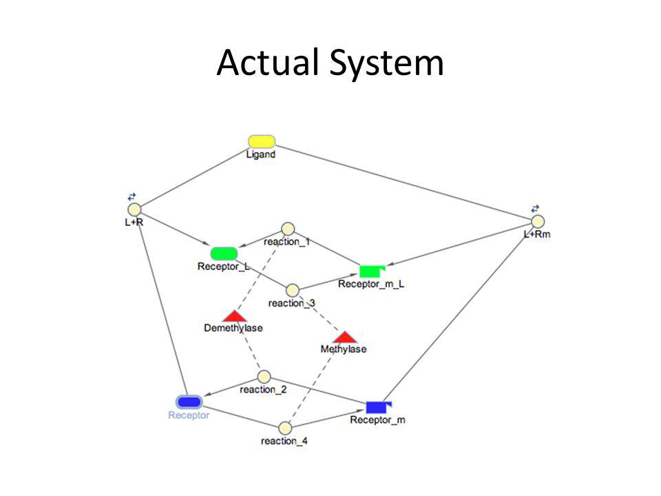 Actual System