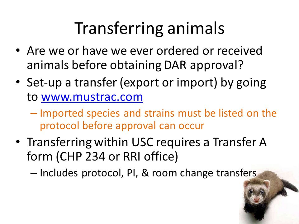 Transferring animals Are we or have we ever ordered or received animals before obtaining DAR approval.