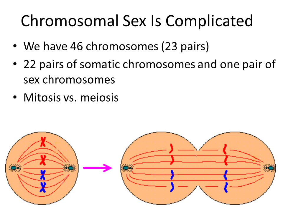 Chromosomal Sex Is Complicated We have 46 chromosomes (23 pairs) 22 pairs of somatic chromosomes and one pair of sex chromosomes Mitosis vs.